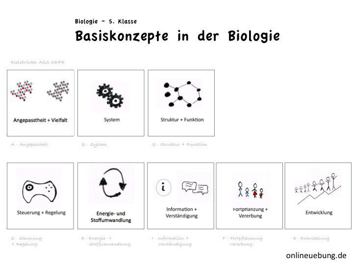 Basiskonzept Biologie - die Dimensionen
